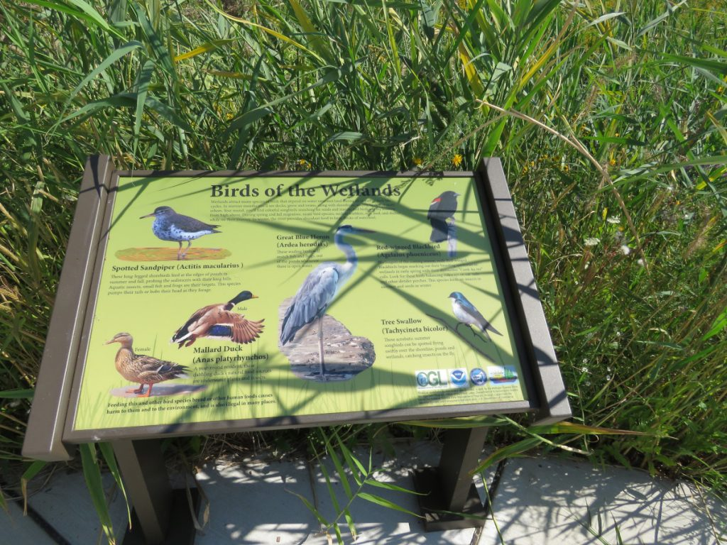 Wetland Park in Port Huron benefitted from a GLRI grant of $1 million.