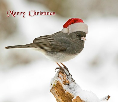 Christmas Bird Count – A Local and