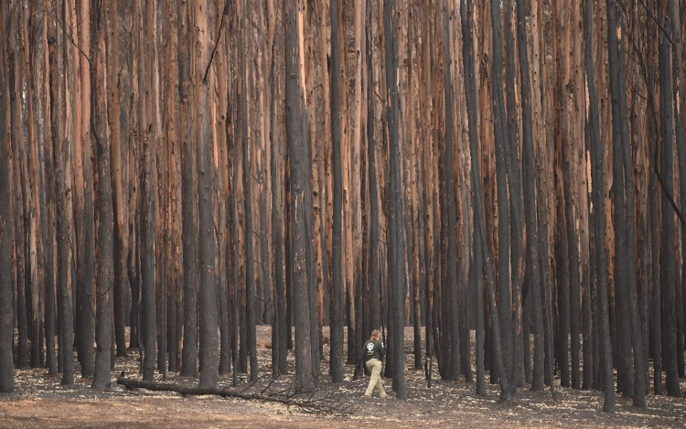 The fires have claimed 28 lives, scorched massive tracts of pristine forests and destroyed thousands of homes - PETER PARKS / ©AFP