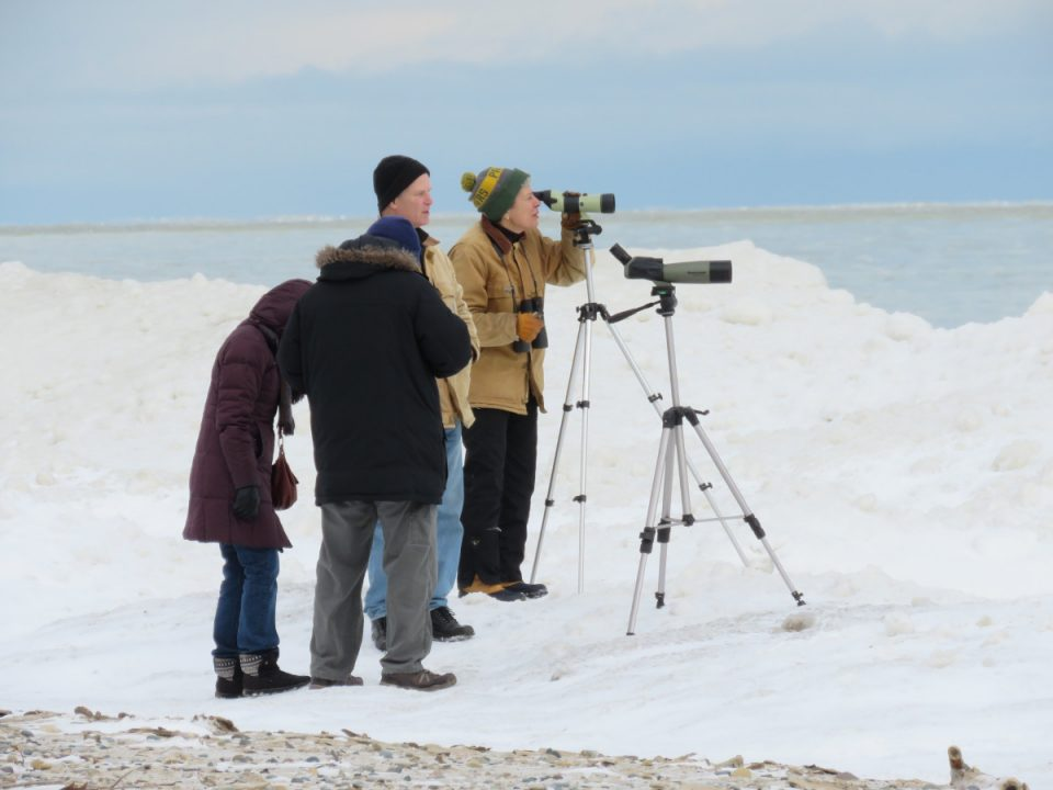 Birders at the sixth annual Bird Blast train their spotting scopes on the fast moving ice far off Light House Beach in Port Huron.