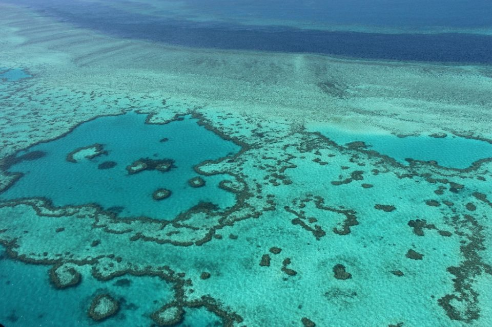 The planet's largest coral reef system is at risk of losing its coveted world heritage status because of declining health - SARAH LAI / ©AFP