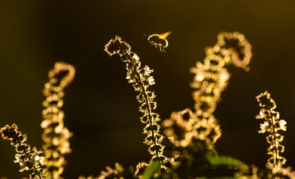 One in six species of bees have gone regionally extinct somewhere in the world (AFP Photo/Ulrich Perrey)