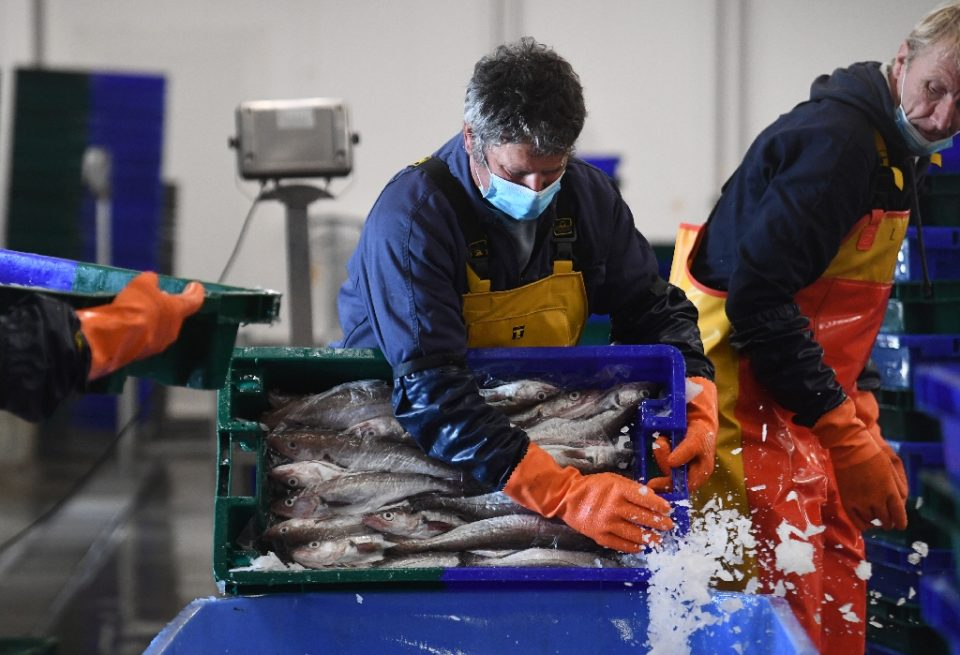 Lobster, turbot, and monkfish pour out of the nets on to the quayside in northwestern France, a good part of it from British territorial waters - Fred TANNEAU / ©AFP