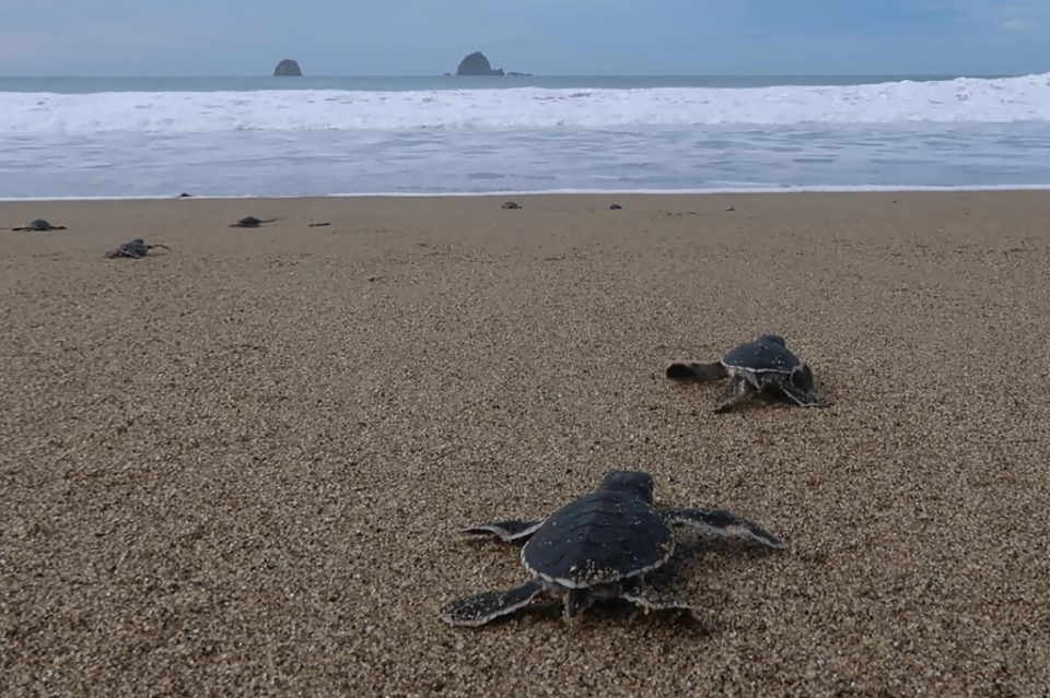 The shores of Mera Batiri National Park in Indonesia are nesting grounds for several species of turtle - Agnes Anya / ©AFP