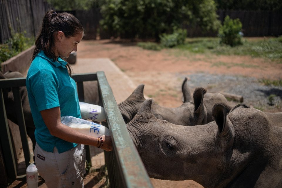 Four staff and two volunteers work around the clock to care for the rhino calves, sometimes even sleeping next to the youngest in an open faced barn - Michele Spatari / ©AFP
